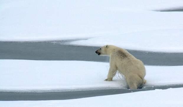 Экспедиция «Хозяин Арктики» вступила вовторой этап