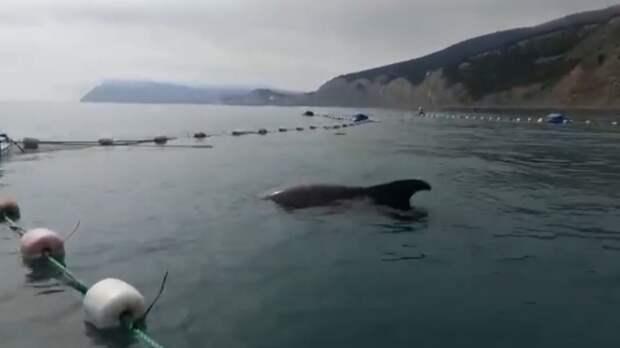Волонтеров обвиняют за то, что они срезали рыболовные сети и спасли дельфинов