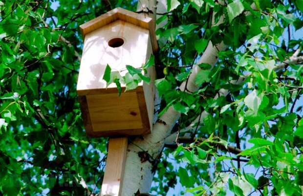 Мастерим жилье для птиц своими руками
