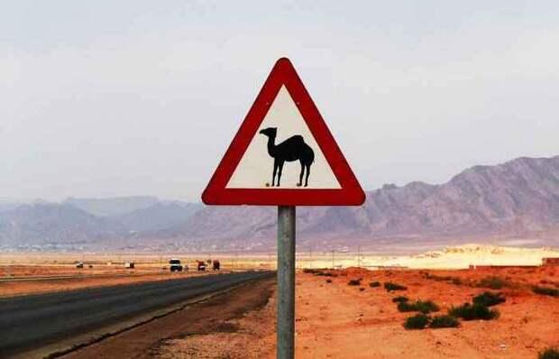 Самые нелепые дорожные законы США других стран