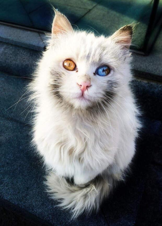 Кот, который запросто может загипнотизировать.