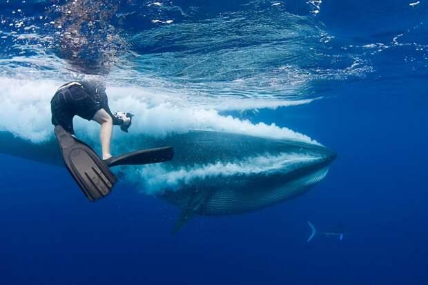 Американский дайвер выбрался живым и невредимым из пасти кита
