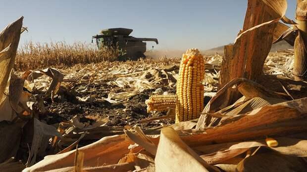 Климатологи предупредили о снижении урожайности из-за глобального потепления
