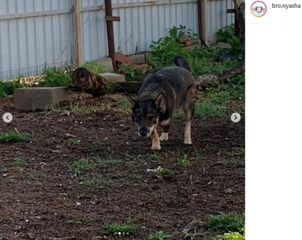 Трехлапый пес прячется от кураторов в 1-м Лихачевском переулке