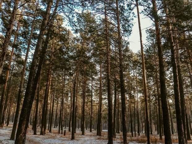 Продлены ограничения пребывания граждан в лесах на территории Забайкалья
