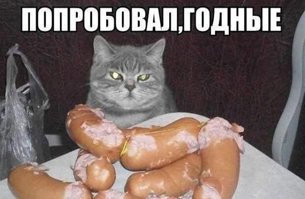 Картинки по запросу котики приколы