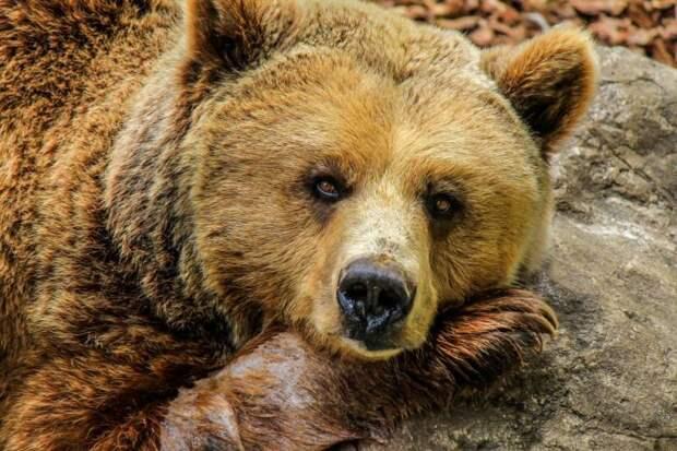 В правительстве Польши: Над нашей страной нависает огромный «медведь»