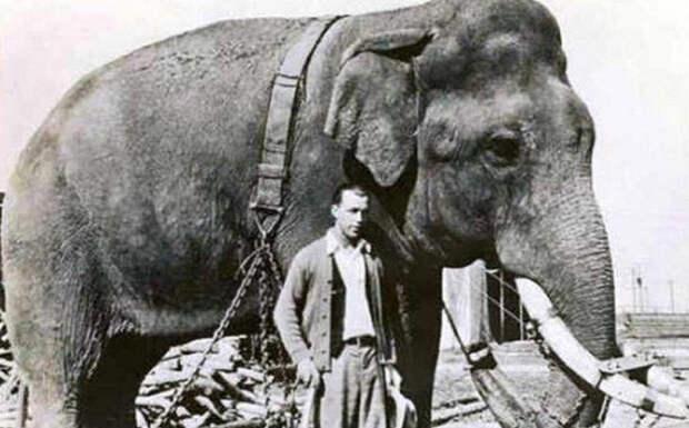 Слон и наркотики