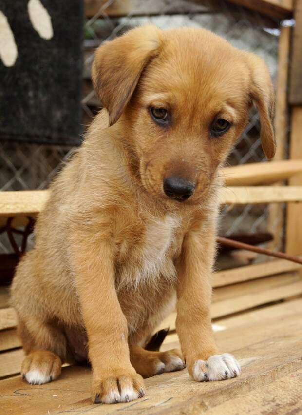 Грустный щеночек плакал под бетонными плитами волонтер, приют, собака, щенок