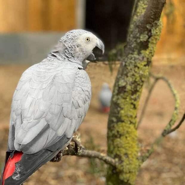 Попугаи-жако устроили переполох в зоопарке, научившись материться, а потом смеяться над собой