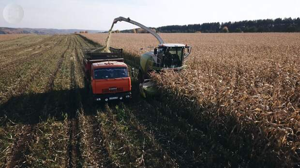 На полях «Русской нивы» в Удмуртии закончилась уборка кукурузы