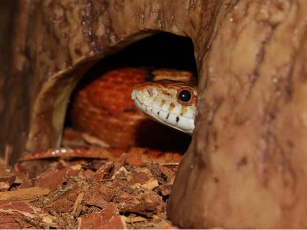 На пороге НИИв Петербурге нашли змею