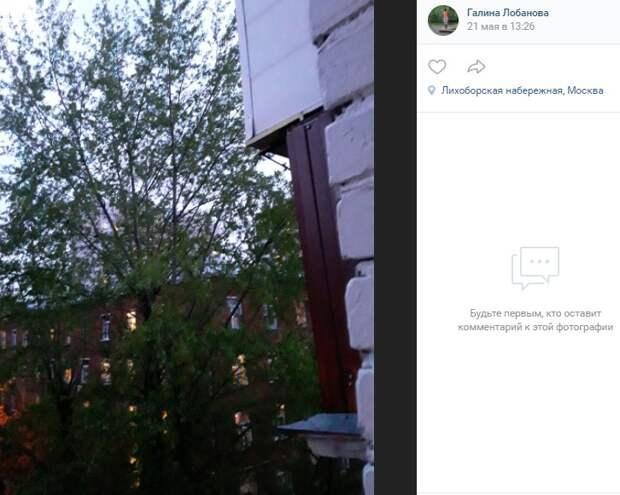 Тополя на Лихоборской «стучатся» в окна к жителям домов
