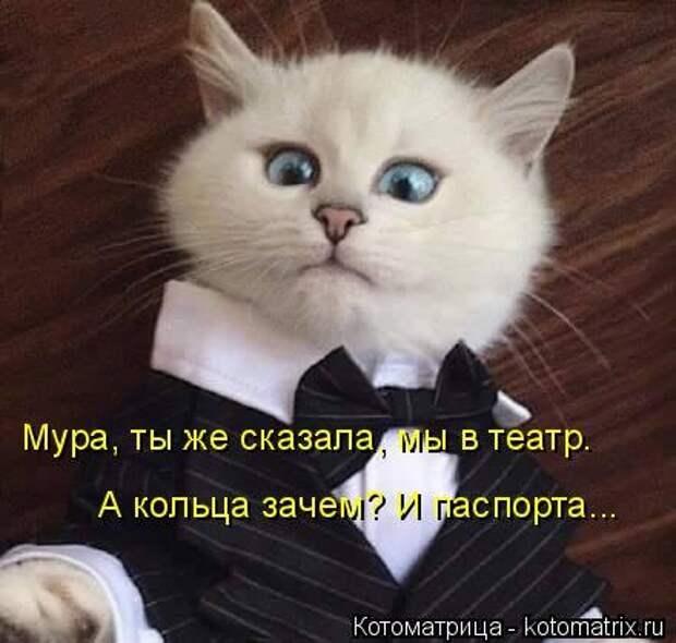 1451492484_kotomatritsa_zq