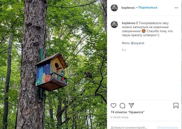Фото дня: необычайной красоты скворечник в Тимирязевском лесу