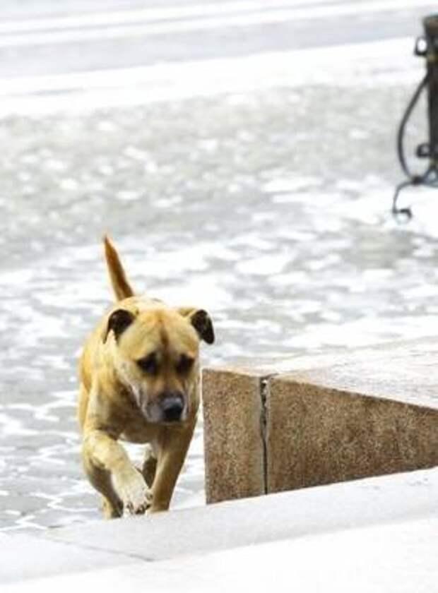 В Иркутской области ведется подсчет бездомных животных