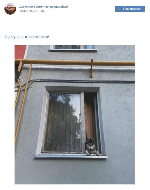 Фото дня: пес выглядывает из окна в Дегунине