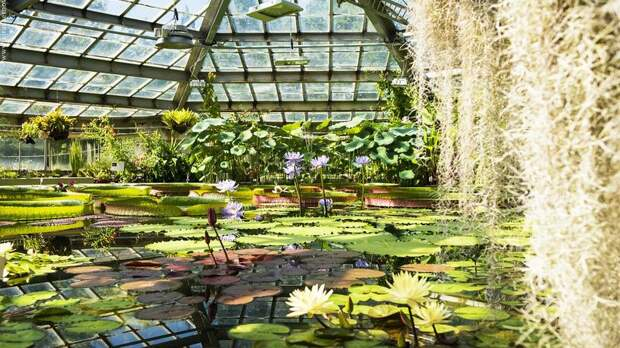 Ботанический сад закроет оранжереи из-за аномальной жары