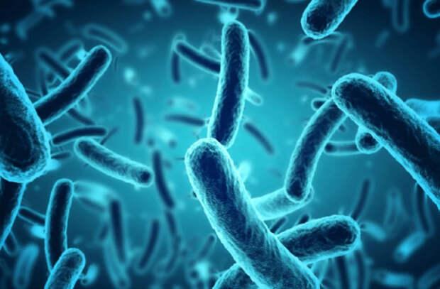 Где больше всего микробов?