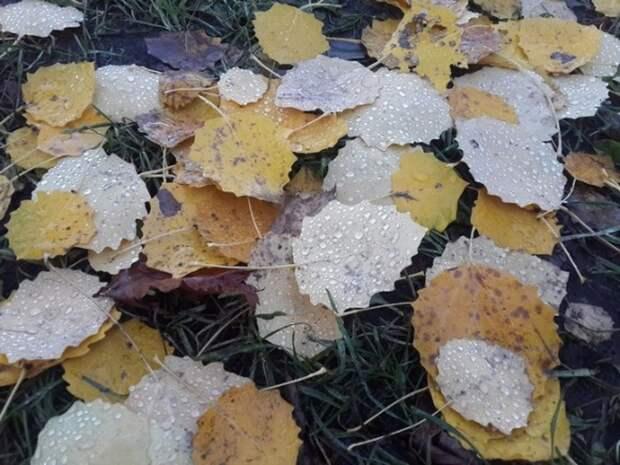 В Курортном районе Петербурга экологи обнаружили «полигон захоронения» вредных листьев