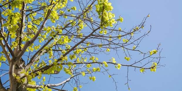 В парке «Москворецкий» высадят более 120 деревьев в честь новорождённых