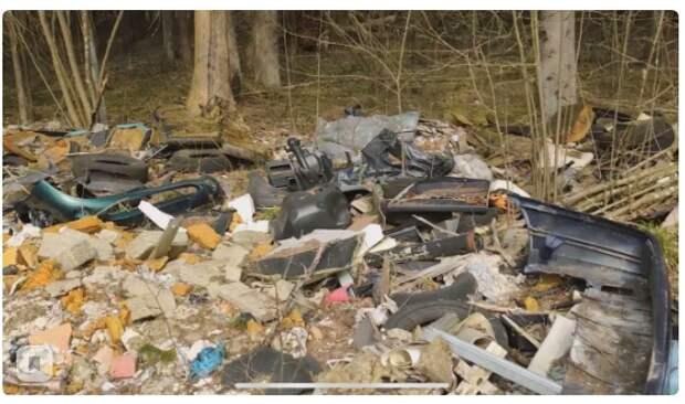 «У вас в России кругом мусор и грязь, а вот в Европе – чистота»: Европеец показал чистоту леса в Германии.