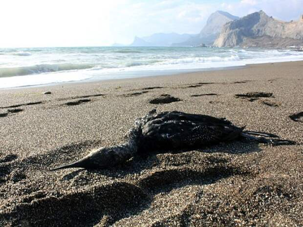 Разлив нефтепродуктов произошел на месторождении структуры «Газпромнефти»