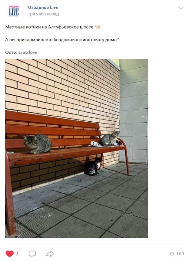 На Алтуфьевском шоссе кошки на лавочке устроили собрание