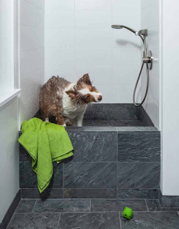 Как справиться с грязью, которую приносят домой животные? 20 лайфхаков от бывалых