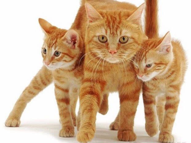 "Кошка дала котятам ""открытый урок"" скалолазания"