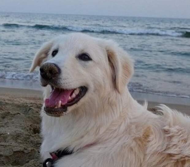 Отправляясь на отдых, семья не рассчитывала встретить там больную бездомную собаку