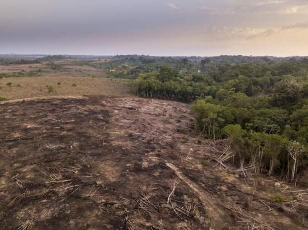 Уничтожение лесов Амазонки вапреле ускорилось на43%: Новости ➕1, 09.05.2021