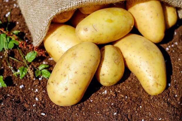 10 интересных фактов о картофеле