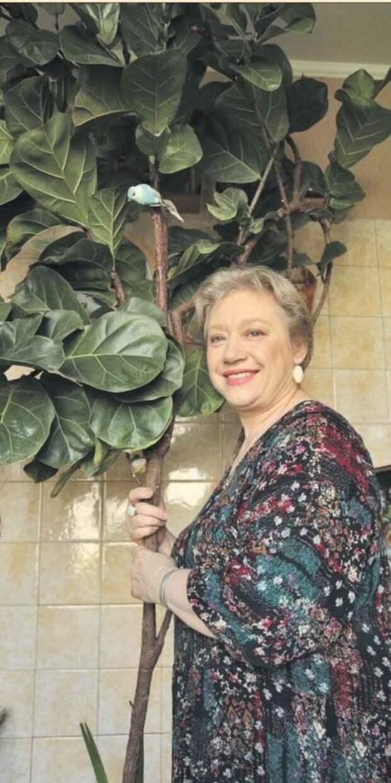 Жительница Лосинки вырастила гигантский фикус