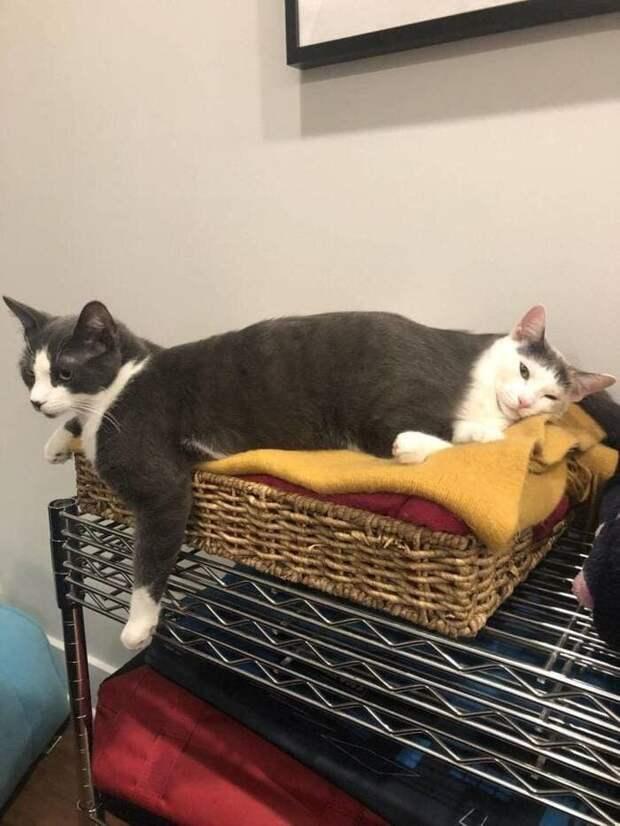 12. Котокот в мире, животные, забавно, кадр, подборка, показалось, прикол, юмор