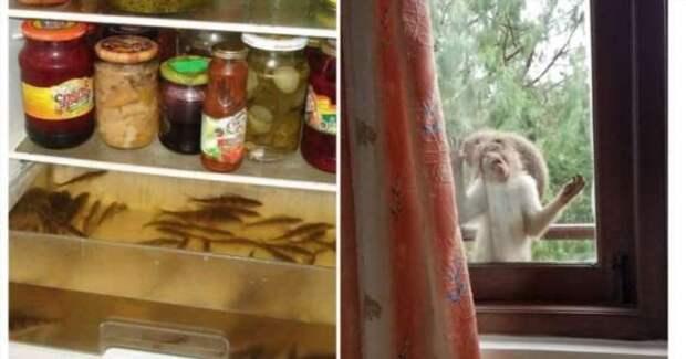12 странных вещей, которые нашли люди в неожиданных местах (13 фото)