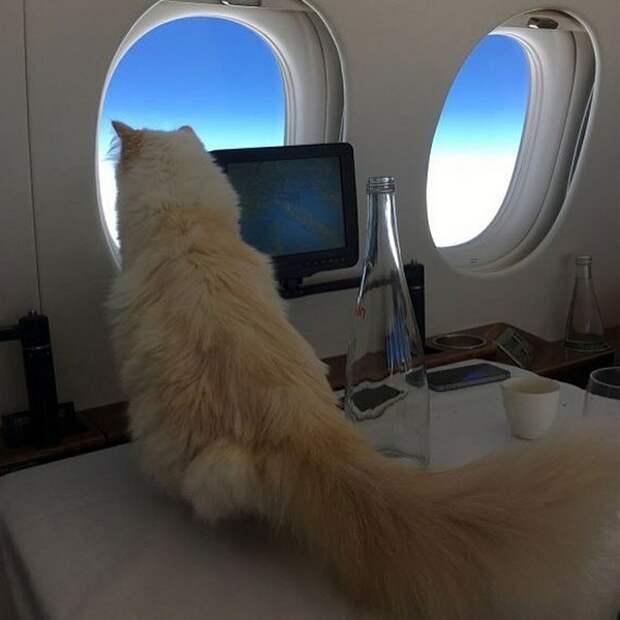 Про перевозку животных в самолете теперь даже шутки грустные