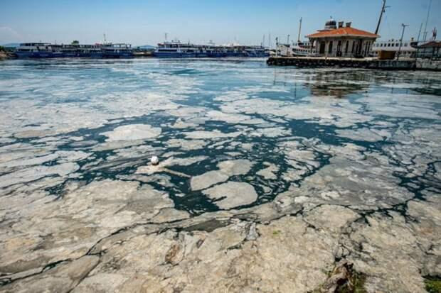 Мраморное море вблизи Стамбула покрылось слизью