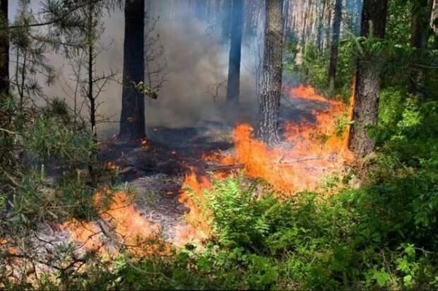 Спастели рассказали о пожарной безопасности в лесу