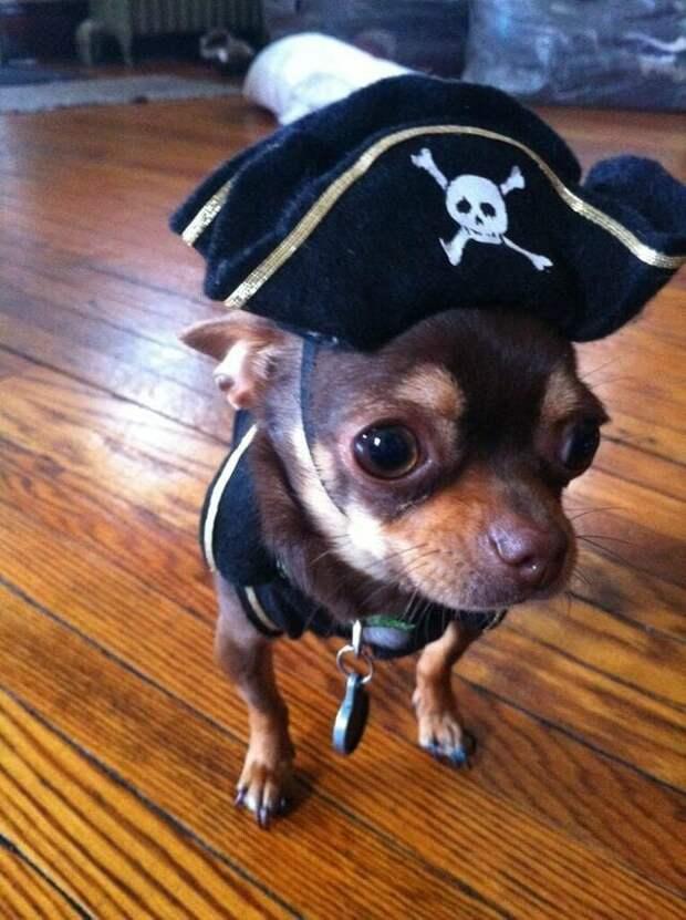 8. «Ухо моей собаки выглядит как её маленькая версия» в мире, животные, забавно, кадр, подборка, показалось, прикол, юмор