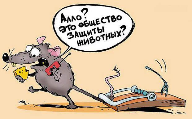 Мыши в доме: как избавиться и какие есть работающие средства