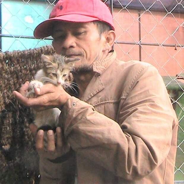 Люди со всего мира помогают этому человеку спасать кошек
