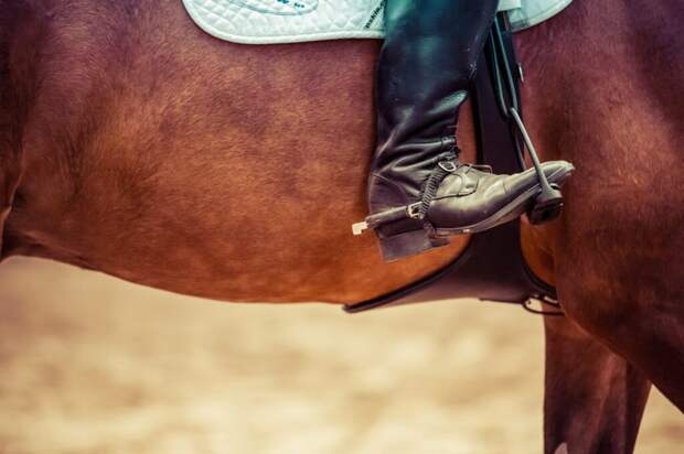 На Олимпиаде дисквалифицирован тренер из Германии из-за избиения коня