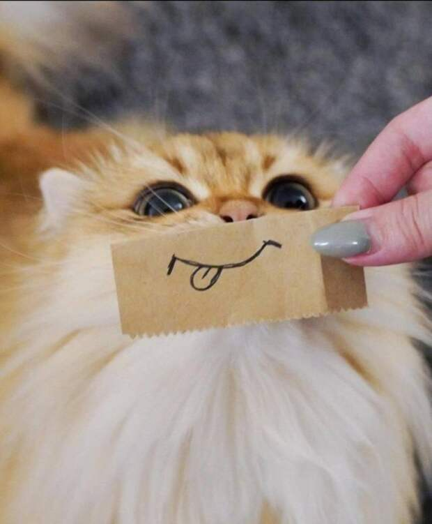 Кот со смайлом