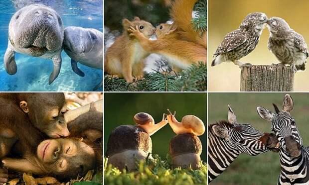Животные тоже отмечают День всех влюбленных