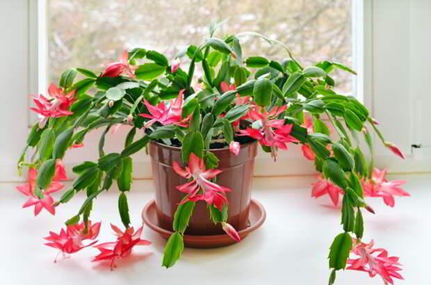 Они даже ночью выделяют кислород… 9 растений, которые хорошо иметь в спальне