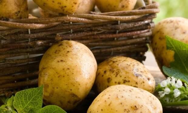 Что можно приготовить из молодой картошки – 8 вкусных и простых блюд