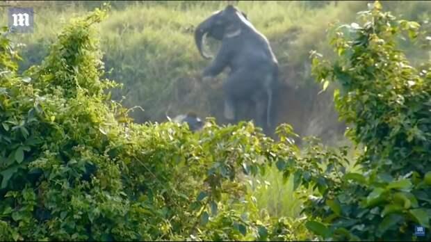 Видео: Два сообразительных слона нашли способ выбраться из канавы