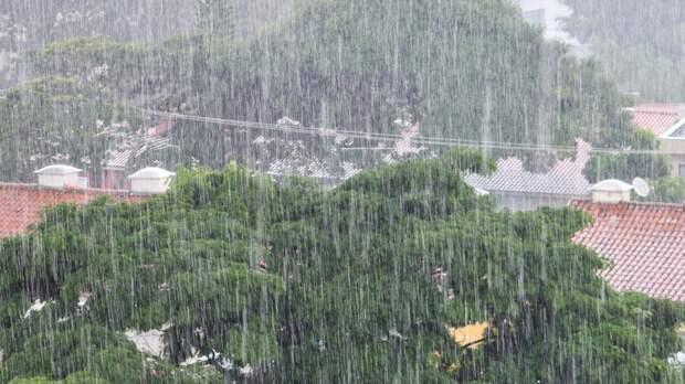 Дожди и сильный ветер ожидают жителей Ленобласти 14 июня