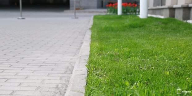 Работы по понижению газонов в Старопетровском сквере завершат до 20 июня